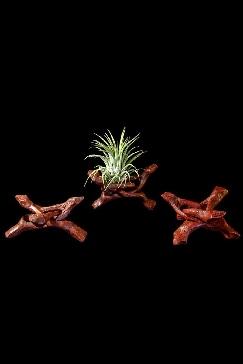 Wood Plant Stand for Mounting a Tillandsia Air Plant (Excludes Ca, Az) Size: 1 Pack