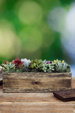 Wood Trough Succulent Planter, 10in pot Live Plant Houseplant Home Decor