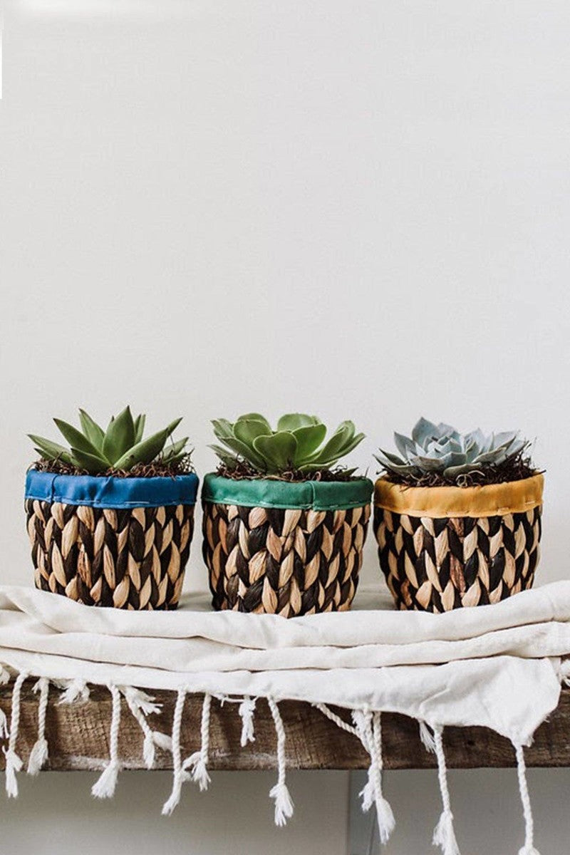 Woven Basket Succulent Planter, 5in pot with Live Plant Houseplant Home Decor