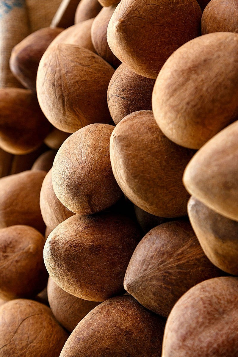 Brown Coconuts (Excludes Ca), Size: 6 Pack