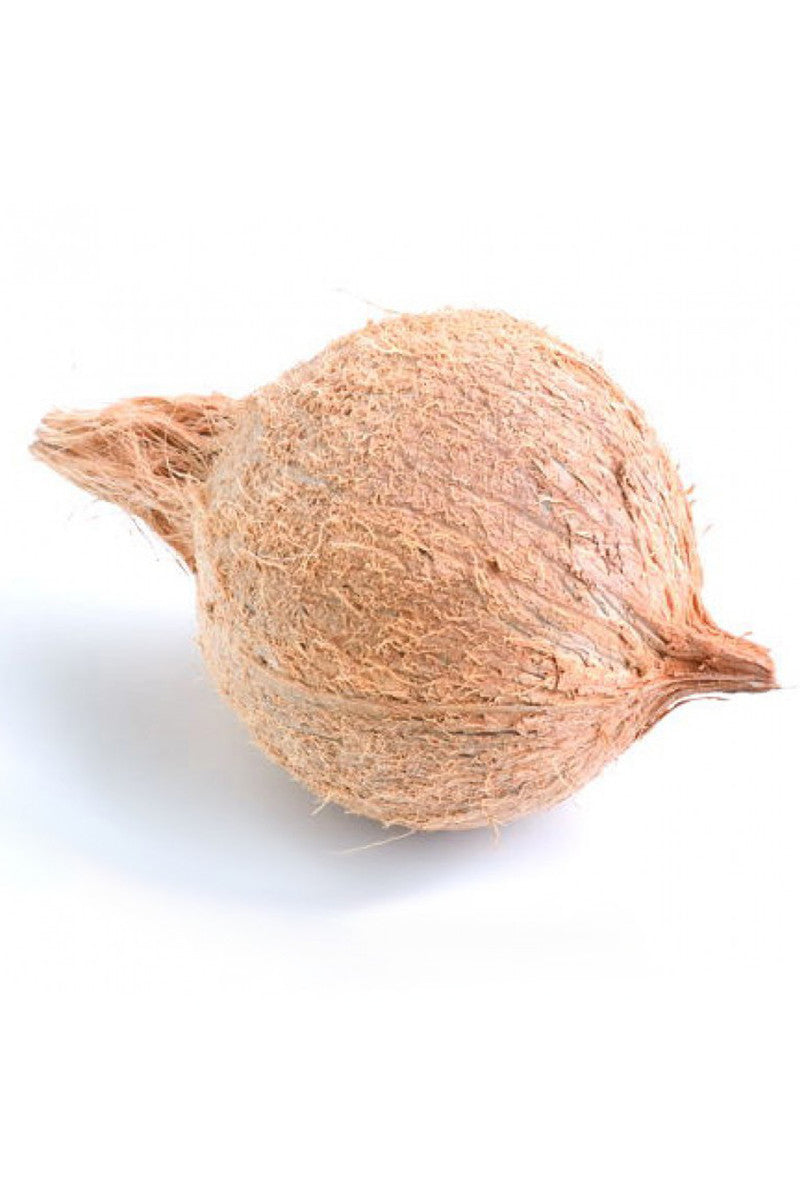 Coconut for Pooja (Puja), Husk, Festivals, (Excludes:CA)