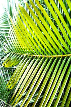 Areca Palm Leaves, Tropical Floral (Excludes Ca), Size: Small x 12