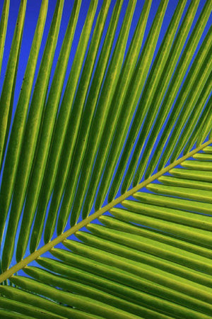 Coconut Palm Leaves, Small, Tropical Floral Decoration (Excludes Ca), Size: 5 Pack