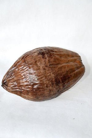 Varnished Coconuts for Decoration (Excludes Ca), Size: Regular x 6