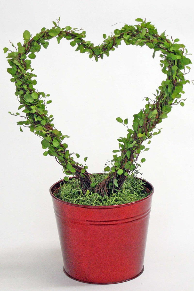 "Angel Vine Plant Heart Wreath, Red Tin Planter, Size: 6.5"" pot"