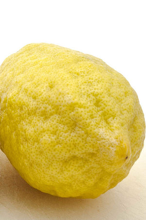 "Yuzu Tree, Semi-Dwarf Lemon, Citrus (Excludes Ca, Az, La, Tx), Size: 1 Gallon (4"" Citra Pot)"
