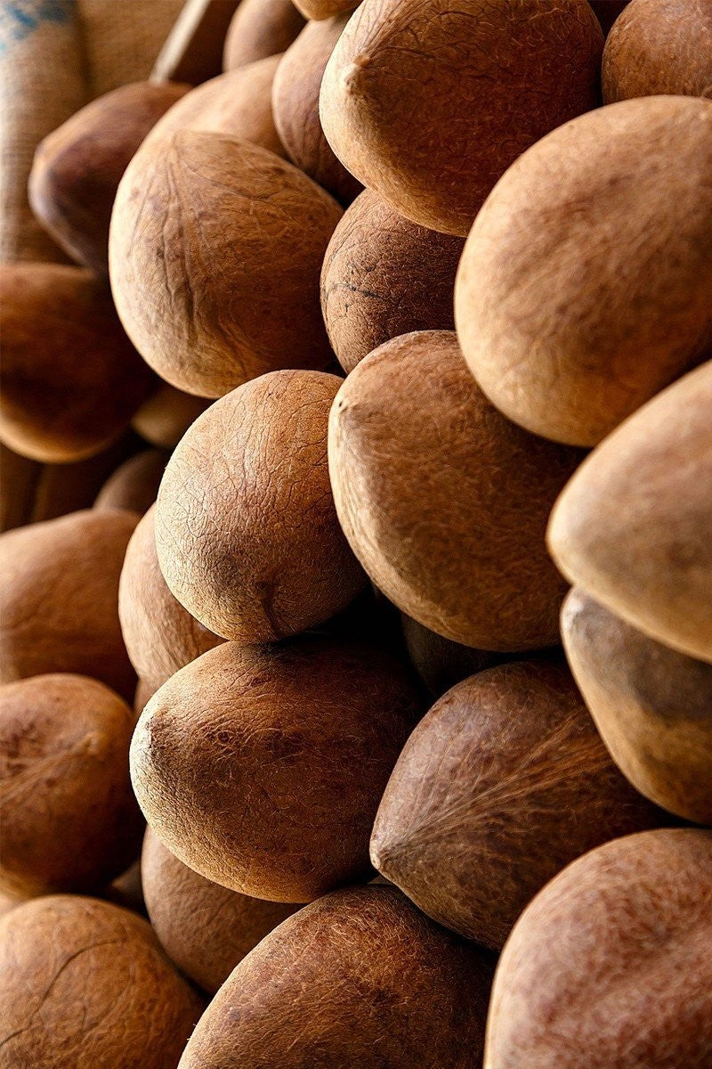 Brown Coconuts (Excludes Ca), Size: 2 Pack