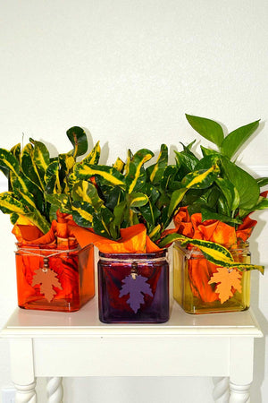 "Fall Glass Planters w/ Burlap 4.75"" Assorted, Centerpiece Decoration for Autumn Halloween (Excludes Ca, Az) Size: 1 Planter"