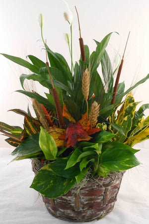 "Fall Wicker Centerpiece 7"" Decoration for Autumn Halloween (Excludes Ca, Az) Size: 1 Planter"