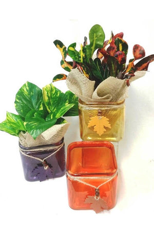 "Fall Glass Planters w/ Burlap 4.75"" Assorted, Centerpiece Decoration for Autumn Halloween (Excludes Ca, Az) Size: Yellow Planter"