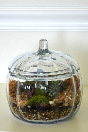 "Glass Pumpkin Terrarium 7"", Fall Centerpiece Decoration for Autumn Halloween, (Excludes Ca, Az) Size: Case 6 Planters"