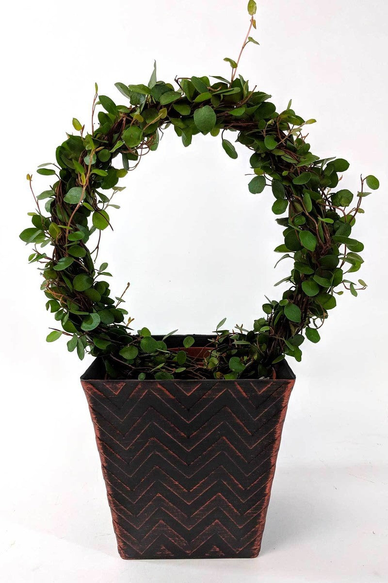 "4"" Angel Vine Wreaths in Copper Chevron Container (Free 2-Day Shipping)"