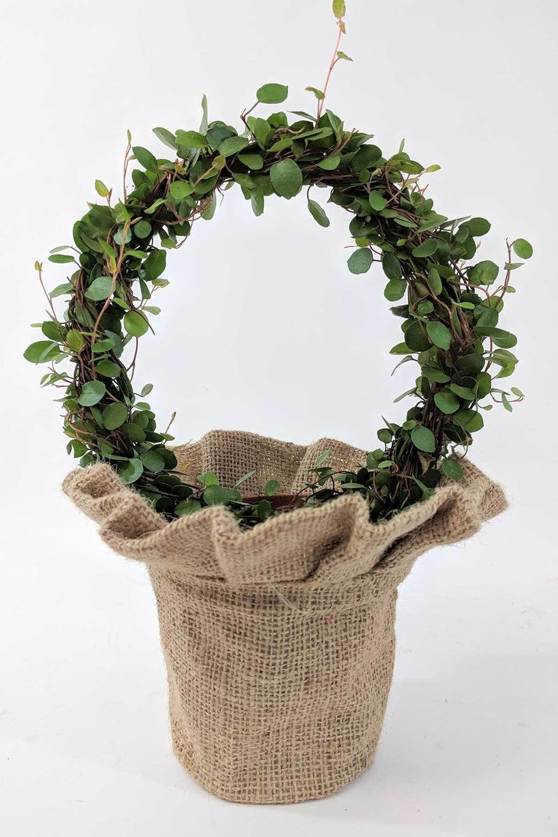 "Angel Vine Plant Wreath, Skirted Burlap, Size: 4"" pot"