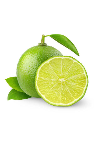 Bearss Lime Tree, Semi Dwarf Citrus (Excludes Fl, Az, Tx), Size: 1 Gallon