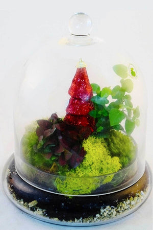Cloche Terrarium with Christmas Decorations (Excludes Ca, Az) Size: 6 inch planter