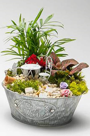 "Garden of Weedin' Galvanized Fairy Garden, 6"", (Excludes Ca, Az) Size: 1 Planter (Live Plant)"