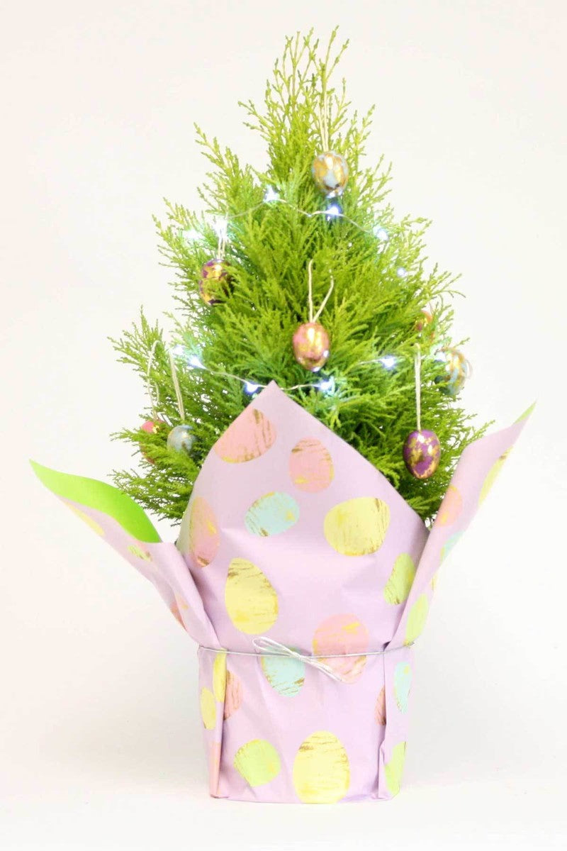 Lemon Cypress with Easter Decorations (Free 2-Day Shipping)