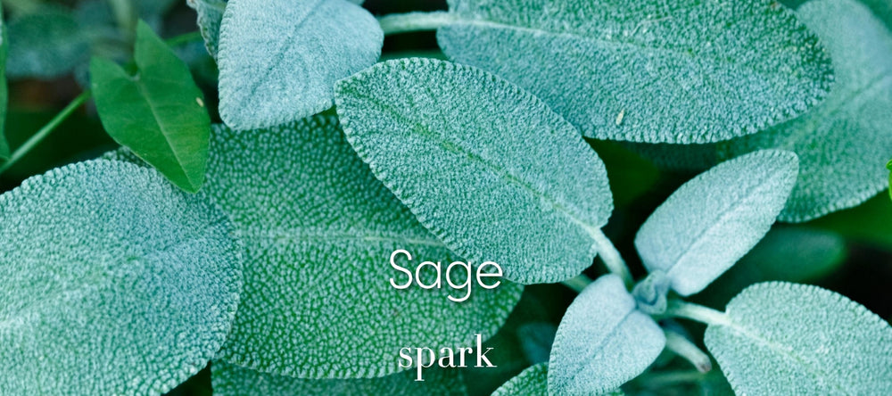 Sage Scented Soy Candles