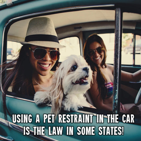 dog seat belt laws by state
