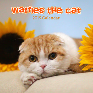 Waffles the Cat Scottish Fold Cat 2019 Calendar