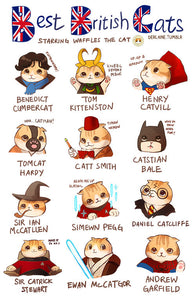 Best British Cats
