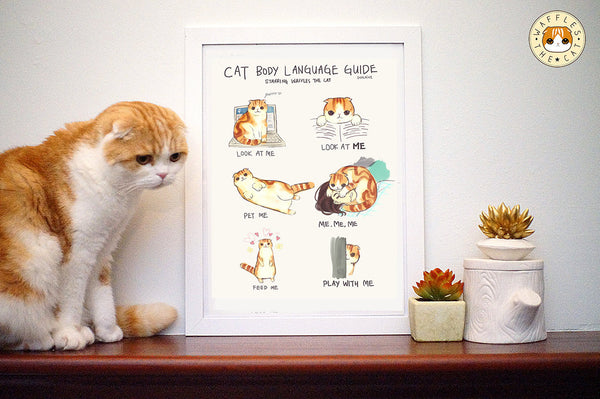 Waffles the Cat Poster - Cat Body Language