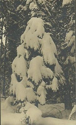 ANTIQUE PHOTO RARE SNOWY TREE FAMOUS PHOTOGRAPHER  AC JORDAN MT HOOD OREGON 1900 - Back from the dead antiques