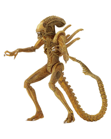 "Aliens – 7"" Scale Action Figure - Sewer Mutation Warrior Alien (2017 Convention Exclusive)"