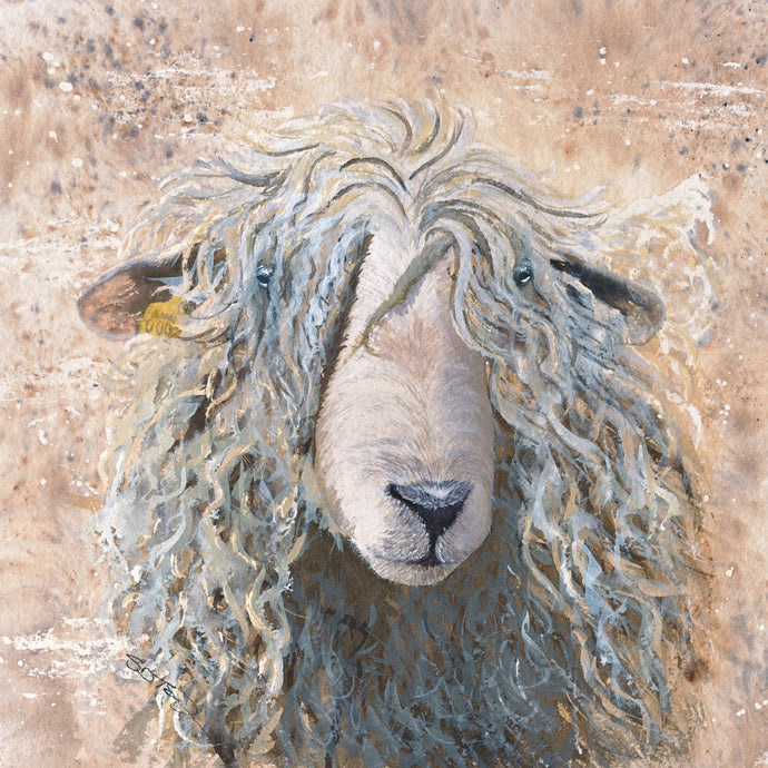 Shaggy Sheep Print by Sue Taylor