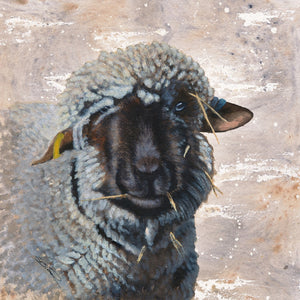 Sheepish Print by Sue Taylor