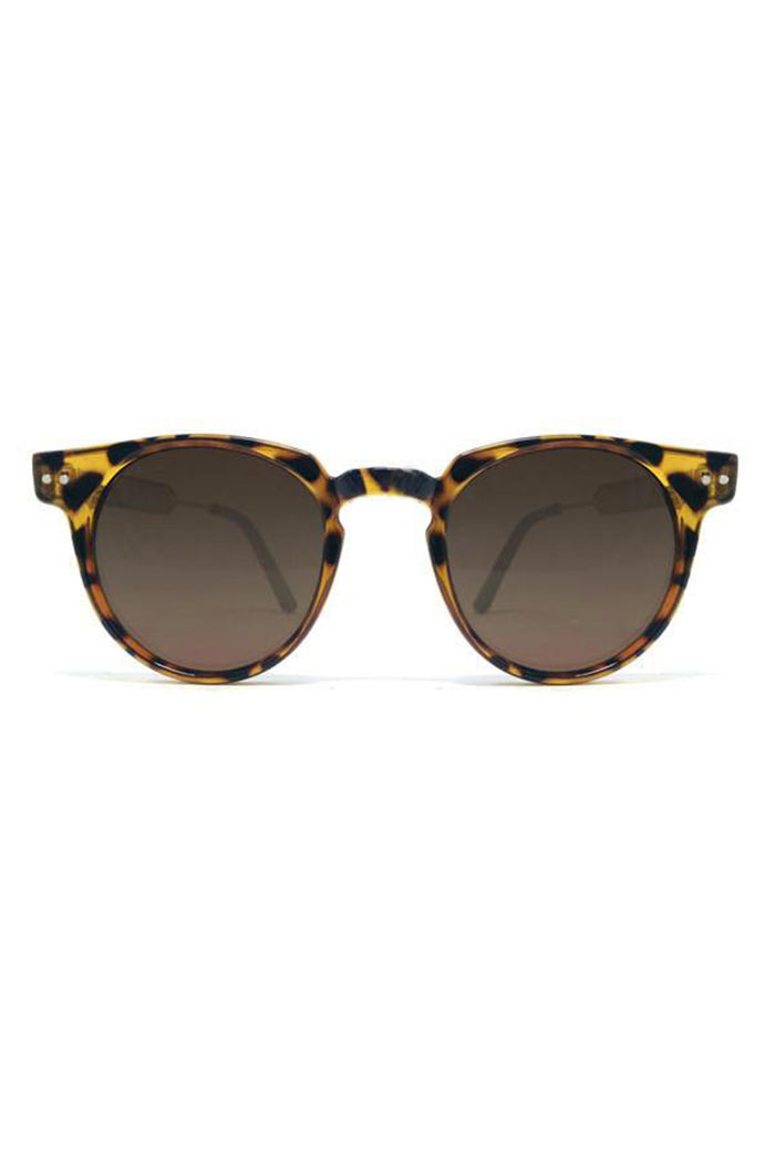 Teddy Boy Tortoise/Brown Sunnies