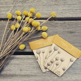 Billy Buttons Gift of Seeds