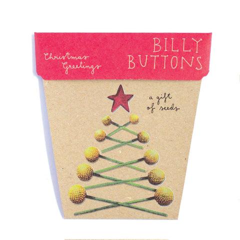 Billy Button Christmas Gift Tag