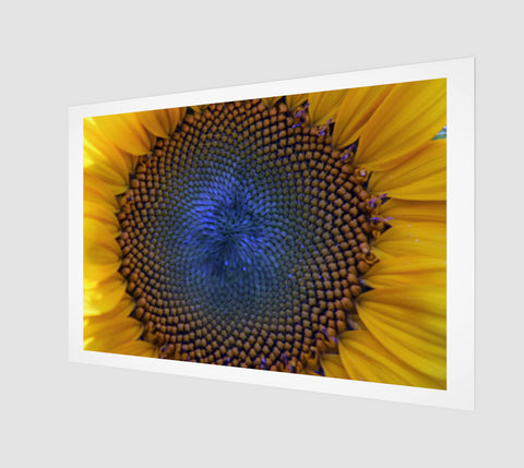 BLUE SUNFLOWER - Limited Reproduction