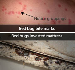 Can You Steam Clean A Mattress For Bed Bugs