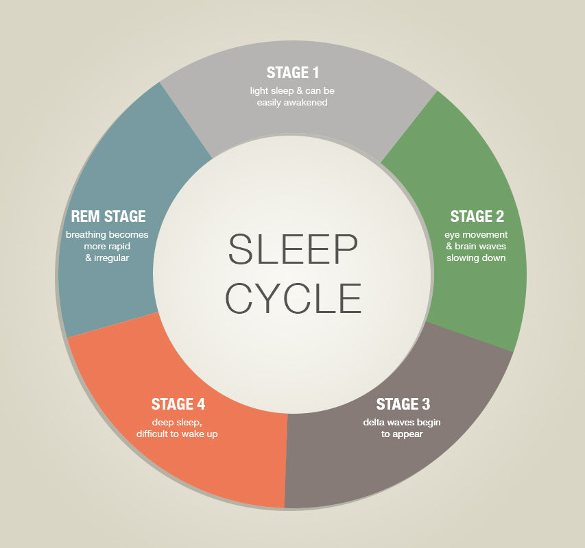as we approach the end of our sleep, it is mainly split between stages 1, 2  and the rem stages