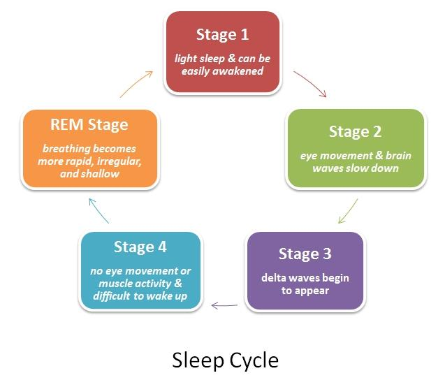 four stages of sleep essay