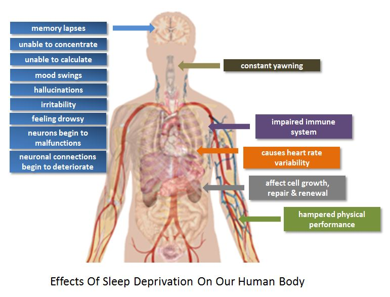Effects Of Sleep Deprivation On Our Human Body