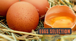 A Guide In Selecting Eggs