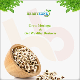 Moringa Dairy Fodder Seed For Increase Milk Production In Animals