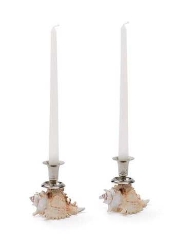 Sea Shell Candle Stick Holders