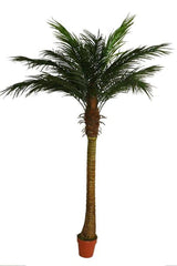 Artificial palm tree.