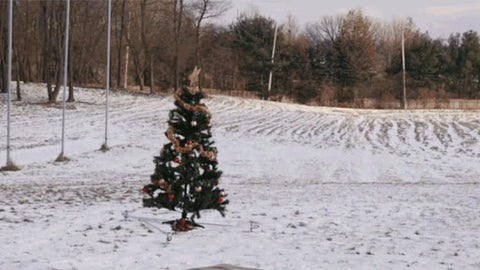 Christmas Tree Placement - Adley & Company Inc.