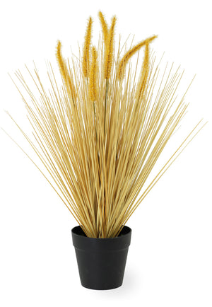 Dogtail Faux Ornamental Grass, 25 Inch Tall