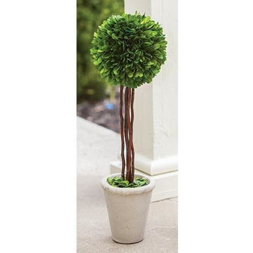 Preserved Boxwood Topiary in Pot,topiary,Adley & Company Inc.