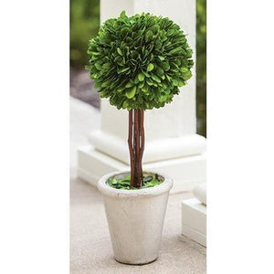 Preserved Boxwood Topiary,succulent,Adley & Company Inc.