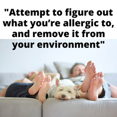 figure out what you're allergic to and remove it