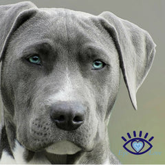 Dry Eye Relief for Your Canine Friends