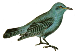 FREE Vintage Bird Image for Bottle Caps Jewelry