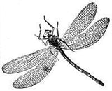 Free Vintage Dragonfly Graphic to Download To Make Photo Jewelry - Photo Jewelry Making